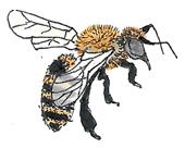 Abelha - ilustração retirada do livro Bicharada de A a Z