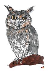 Coruja - ilustração retirada do livro Bicharada de A a Z