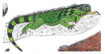 Lagarto - ilustração retirada do livro Bicharada de A a Z