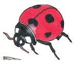 Joaninha - ilustração retirada do livro Bicharada de A a Z